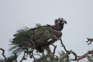 End of winter season birdphotography at Evros