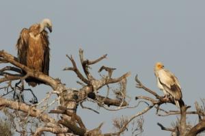 5+1 helpful tips to practice social distancing in birdwatching